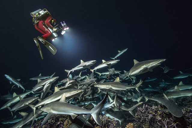 In total, this set of images required 21 weeks of diving, day and night, spanning four years and taking 85,000 images. (Photo by Laurent Ballesta/Caters News Agency)