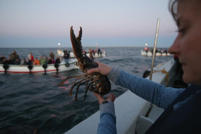 Isabel Schmalenbach, an environmental scientist with the Helgoland Biological Institute (Biologische Anstalt Helgoland), part of the Alfred Wegener Institute for Polar and Marine Research, tosses an adult female European lobster (Homarus gammarus) into the North Sea before also releasing baby lobsters as sponsors of the lobsters look on from boats on August 3, 2013 off the coast of Helgoland Island, Germany. (Photo by Sean Gallup/Getty Images)