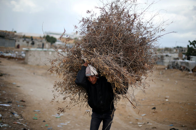 A Palestinian man carries tree branches he collected to be used for cooking and heating on a rainy day in Khan Younis in the southern Gaza Strip December 14, 2016. (Photo by Ibraheem Abu Mustafa/Reuters)