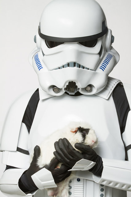 A Storm Trooper with a guinea pig. (Photo by Rohit Saxena/Caters News)