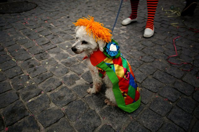 A dog dressed as a clown participates in the clowns parade in Sesimbra village, Portugal, February 27, 2017. (Photo by Pedro Nunes/Reuters)