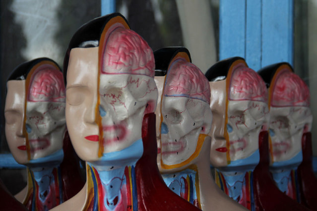 Human anatomy mannequins are displayed on April 23, 2014 in Depok, West Java, Indonesia. The mannequins are made from fiberglass and will be used in schools, hospitals and laboratories. (Photo by Nurcholis Anhari Lubis/Getty Images)