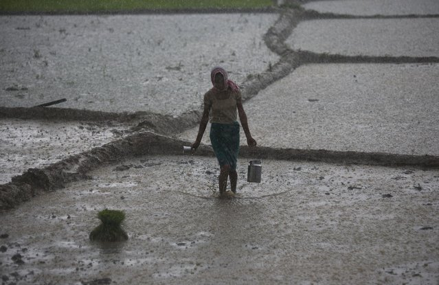 A woman carries drinking water for others working in heavy rain at a paddy field in Reba Maheswar village, 56 kilometers (35 miles) east of Gauhati, India, Friday, July 3, 2015. (Photo by Anupam Nath/AP Photo)