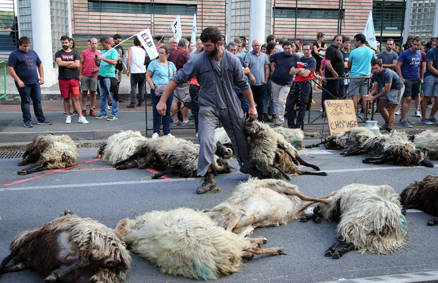 Shepherd Romain Jaurigueberry brings dead sheep to sub-prefecture of Bayonne, southwestern France, to protests against the rising bear attacks on sheep herds in Pyrenees mountains, Monday, September 2, 2019. (Photo by Bob Edme/AP Photo)