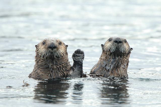 """Hi!"". (Photo by Donna Bourdon/Comedy Wildlife Photo Awards 2019)"