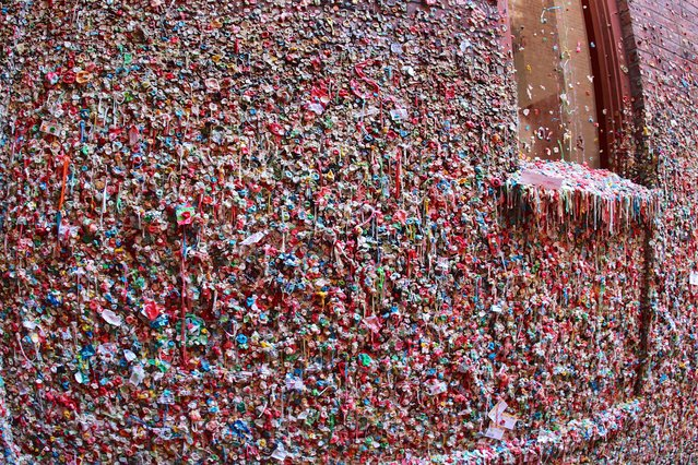 These amazing pictures shows a wall covered entirely in bubble gum – a work of art created by thousands of tourists. David Fulmer, 37, from Pittsburgh, USA took these pictures of the Gum Wall, while on holiday with his girlfriend in Seattle, USA. The wall is decorated with thousands of different pieces of colourful bubble gum, stuck on by tourists who have passed the wall over the years. David was hoping to visit three National Parks as part of his trip but took a pit stop in Seattle to explore the Pike Place Market. (Photo by Caters News)