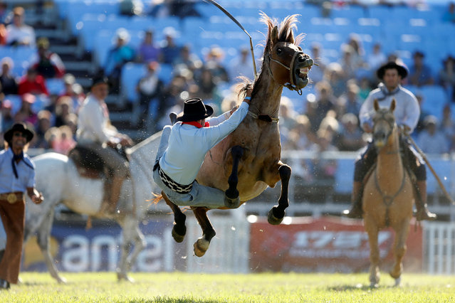 A gaucho is unseated by an untamed horse during Creole week celebrations in Montevideo, Uruguay on March 27, 2018. (Photo by Andres Stapff/Reuters)