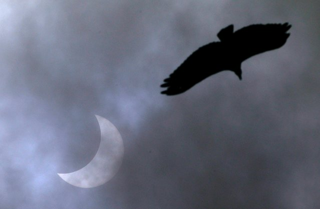 A bird is seen next to a solar eclipse, visible in parts of Chile, Argentina and Brazil, in Porto Alegre, Brazil, December 14, 2020. (Photo by Diego Vara/Reuters)