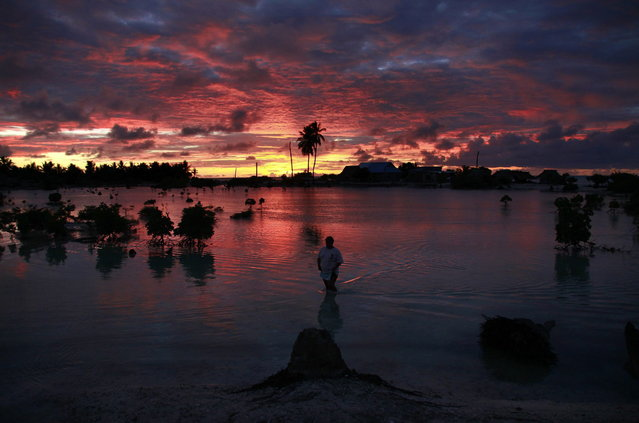 A villager wades through a small lagoon, which at high-tide laps at the base of homes, near the village of Tangintebu on South Tarawa in the central Pacific island nation of Kiribati May 25, 2013. (Photo by David Gray/Reuters)