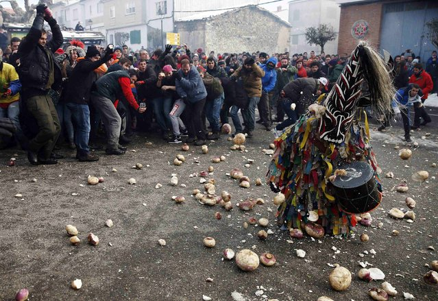 Revellers throw turnips at the kneeling Jarramplas as he makes his way through the streets beating his drum during the Jarramplas traditional festival in Piornal, southwestern Spain, January 20, 2015. (Photo by Sergio Perez/Reuters)