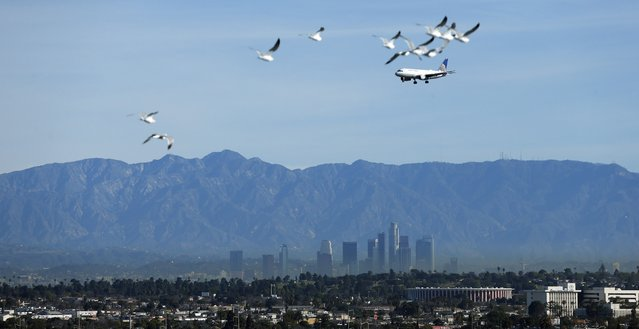 Birds fly against the backdrop of the downtown skyline and The Forum (R) in Los Angeles, California February 11, 2015. (Photo by Mario Anzuoni/Reuters)