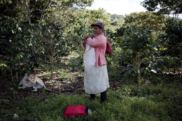 A coffee picker takes a break at the Nogales farm in Jinotega, Nicaragua January 7, 2016. (Photo by Oswaldo Rivas/Reuters)