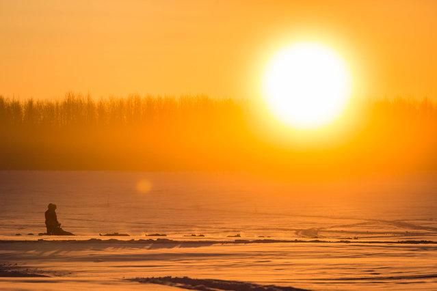 Norwegian rookie Thomas Waerner mushes on the Yukon River between Nulato and Kaltag, Alaska, during the Iditarod Trail Sled Dog Race, Sunday, March 15, 2015. (Photo by Loren Holmes/AP Photo/Alaska Dispatch News)