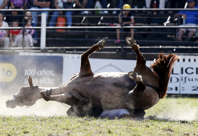 A gaucho is unseated by a wild horse during the annual celebration of Criolla Week in Montevideo, March 30, 2015. (Photo by Andres Stapff/Reuters)