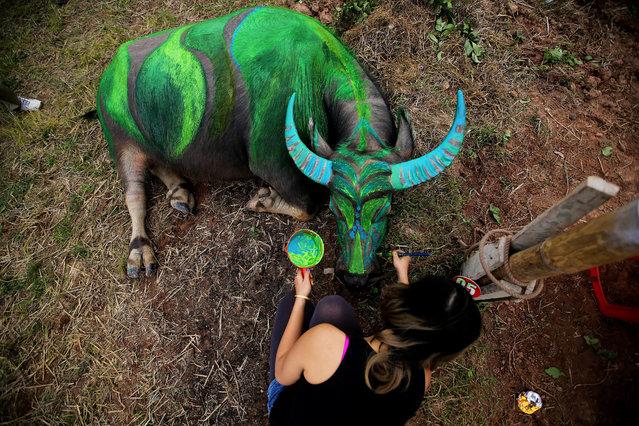 An artist paints a buffalo during the 'Painting on Buffalo' festival (Tich Dien) in Ha Nam province, Vietnam, 02 February 2017. On the 6th day of the first lunar month, artists from all over the country participated in the decorating contest, attracting hundreds of visitors to the festival. (Photo by Luong Thai Linh/EPA)