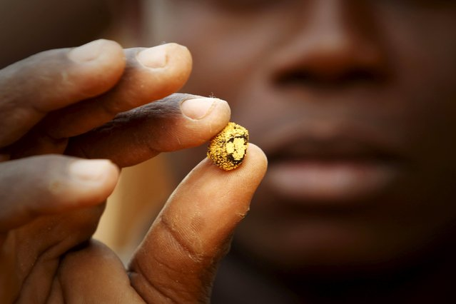 A gold prospector holds a gold nugget between his fingers at a gold mine near the village of Gamina in western Ivory Coast, March 16, 2015. (Photo by Luc Gnago/Reuters)