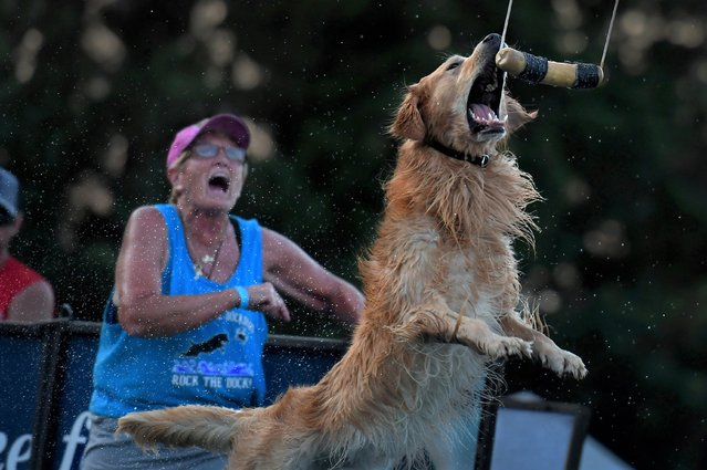"""Scores of """"Dock Dogs"""" participate in an entertaining leaping event at the Montgomery County Agricultural Fair in Gaithersburg, Md. on August 10, 2019. (Photo by Michael S. Williamson/The Washington Post)"""