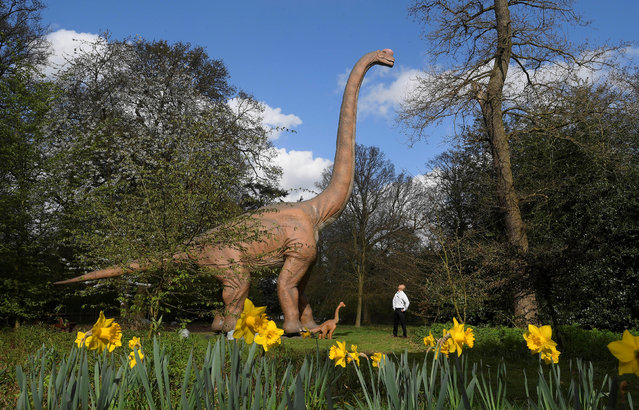 A man views an animatronic life-size dinosaur ahead of an interactive exhibition, Jurassic Kingdom, at Osterley Park in west London, Britain, March 31, 2017. (Photo by Toby Melville/Reuters)