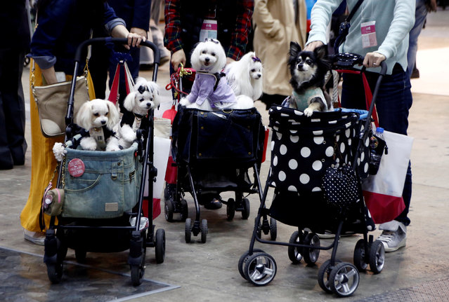 Visitors carry their pet dogs on pet strollers during Interpets in Tokyo, Japan March 30, 2017. (Photo by Kim Kyung-Hoon/Reuters)