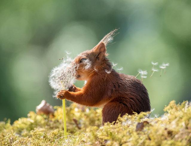 """""""Squirrel Wishes"""". (Photo by Geert Weggen/Comedy Wildlife Photo Awards 2019)"""