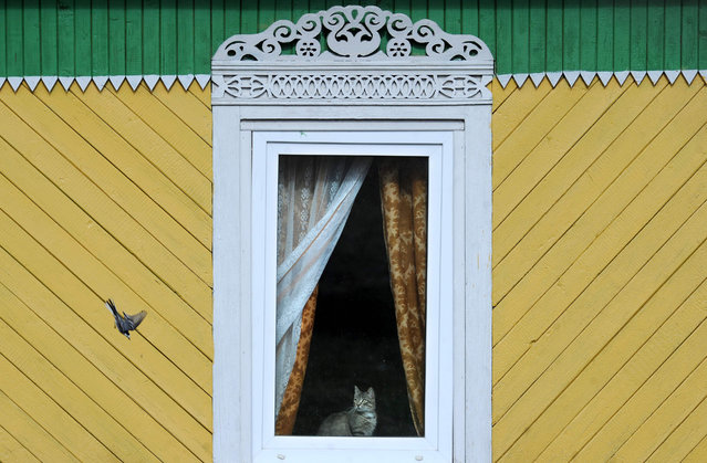 A cat looks at a bird through a window in the village of Zembin, some 75 km northeast of Minsk, on April 12, 2017. (Photo by  Sergei Gapon/AFP Photo)