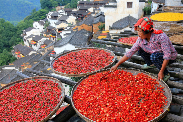 A woman dries chili peppers in the sun at a village in Wuyuan County, Jiangxi province, China July 21, 2017. (Photo by Reuters/China Stringer Network)
