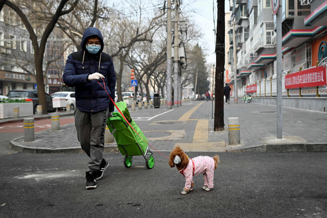 A man wearing a face mask walks his dog as he pulls a trolley after shopping in Beijing on February 13, 2020. The number of deaths and new cases from China's COVID-19 coronavirus outbreak spiked dramatically on February 13 after authorities changed the way they count infections in a move that will likely fuel speculation that the severity of the outbreak has been under-reported. (Photo by AFP Photo/China Stringer Network)