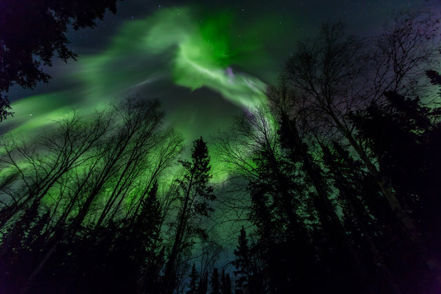 CJ traveled to Alaska in 2013 to photograph the aurora at its peak of the 12 year solar cycle and again in 2014 with his family. (Photo by CJ Kale/Caters News)
