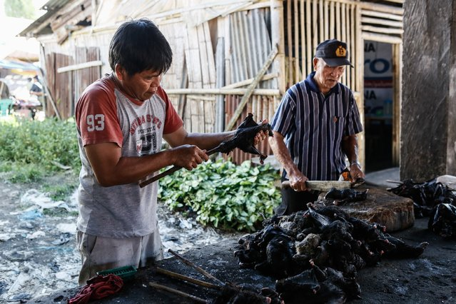 Men prepare to roast bats at Langowan traditional market on August 9, 2014 in Langowan, North Sulawesi. The Langowan traditional market is famous for selling a variety of extreme food such as dogs, bats, rats, wild boar, and snakes. (Photo by Putu Sayoga/Getty Images)