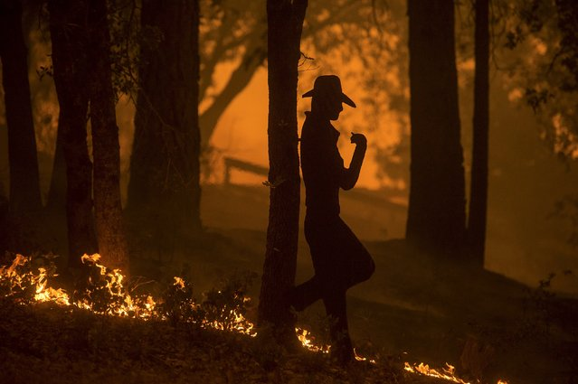 Flames from the Butte fire pass a yard sculpture in Mountain Ranch, California September 11, 2015. (Photo by Noah Berger/Reuters)