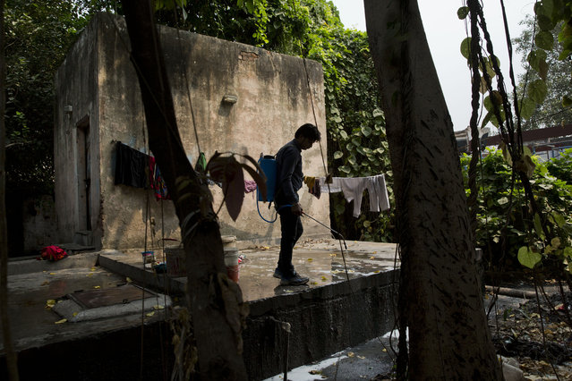 A municipal worker sprays disinfectants on sewage water near a hospital to prevent mosquitoes from breeding in New Delhi, India, Wednesday, September 16, 2015. New Delhi has been hit by an outbreak of the mosquito-borne disease, dengue fever. Nearly 1,900 cases have been recorded in the city's hospitals. (Photo by Bernat Armangue/AP Photo)