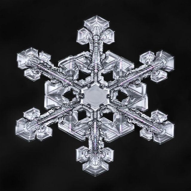 Snowflakes can possess unending beauty and details even in a single crystal that measures only a few millimeters in diameter. (Photo by Don Komarechka/Caters News Agency)
