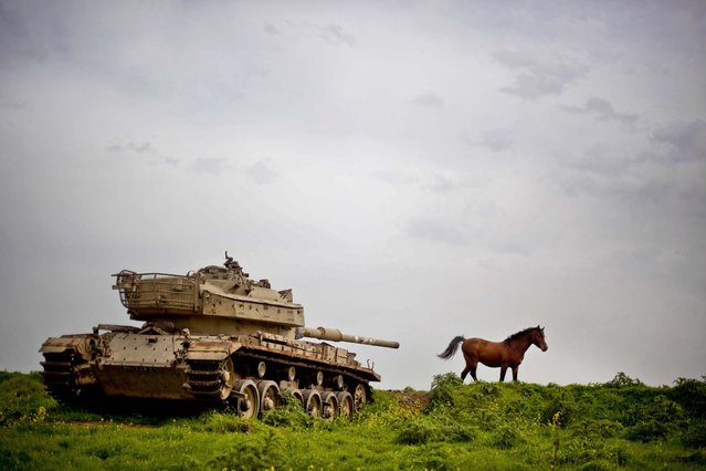 A horse runs in a pasture next to an old Israeli tank in the Israeli-controlled Golan Heights on the border with Syria, March 8, 2013. (Photo by Ariel Schalit/Associated Press)