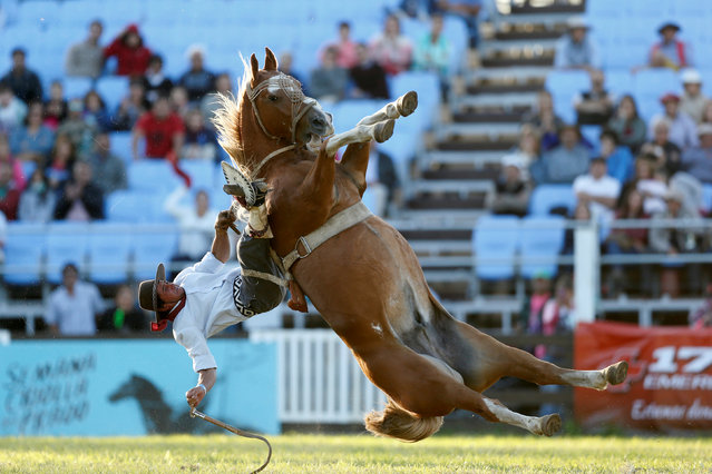 A gaucho rides an untamed horse during Creole week celebrations in Montevideo, Uruguay on March 27, 2018. (Photo by Andres Stapff/Reuters)