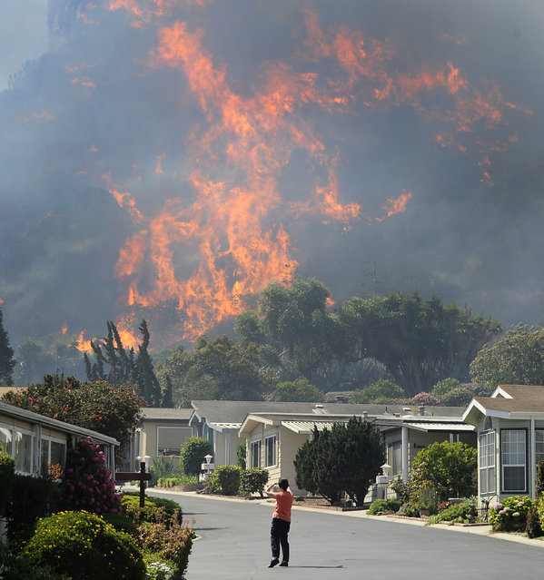 A resident looks at flames racing across hills as a raging brush fire pushes towards the coast in Camarillo May 2, 2013. The wind-driven wildfire raging along the California coast north of Los Angeles prompted the evacuation of hundreds of homes and a university campus on Thursday as flames engulfed several farm buildings and recreational vehicles near threatened neighborhoods. (Photo by Gene Blevins/Reuters)