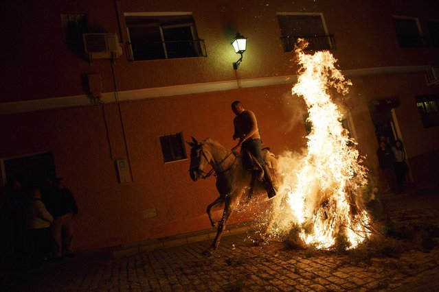 "A man rides through the flames on a horse during the ""Luminarias"" annual religious celebration on the eve of Saint Anthony's Day in the village of Alosno, southwest Spain, January 16, 2015. (Photo by Marcelo del Pozo/Reuters)"