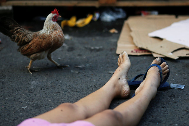 A chicken is seen next to the body of a woman killed by unknown gunmen at the market in a port area of Manila, Philippines October 28, 2016. (Photo by Damir Sagolj/Reuters)