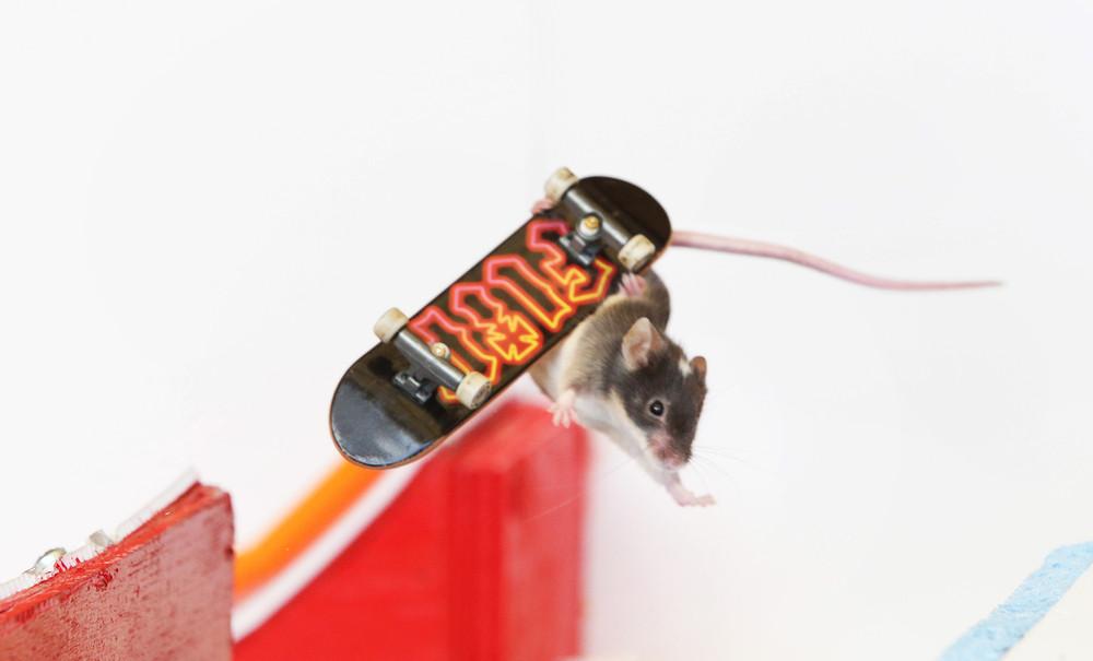 Skateboarding Mice by Shane Willmott