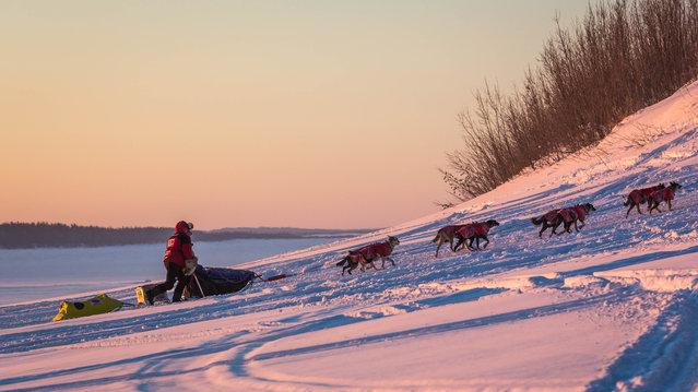 Norwegian rookie Thomas Waerner mushes towards Kaltag, Alaska, during the Iditarod Trail Sled Dog Race, Sunday, March 15, 2015. (Photo by Loren Holmes/AP Photo/Alaska Dispatch News)