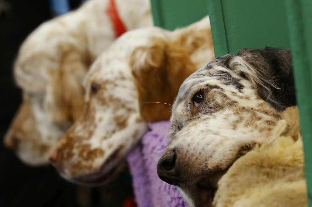 Crufts Dog Show in Birmingham, Part 2