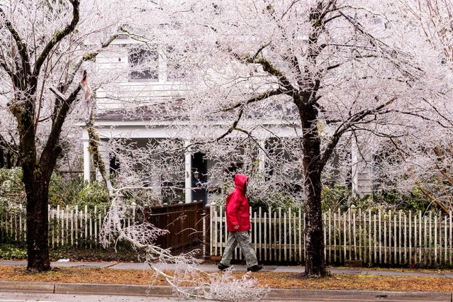 A woman walks past ice covered trees after a rare winter ice storm swept across the South February 12, 2014 in Summerville, South Carolina. (Photo by Richard Ellis/AFP Photo)