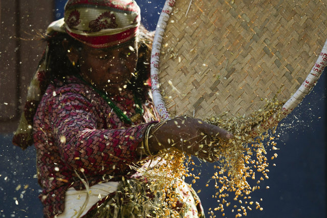A Nepalese woman separates chaff from wheat on the outskirts of Katmandu, Nepal, Thursday, May 2, 2019. Agriculture is the main source of food, income and employment for the majority of people in Nepal. (Photo by Niranjan Shrestha/AP Photo)