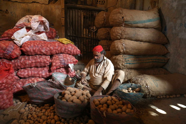 A worker sorts potatotes at a market in Karachi, Pakistan, 13 May 2019. Pakistan and the IMF have reached a new agreement securing a six billion US dollars bailout for the cash strapped country, following months of painstaking negotiations between the two sides. (Photo by Shahzaib Akber/EPA/EFE)