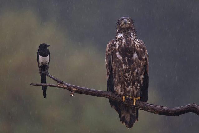 """GDT Naturfotograf 2014 – """"Die besten Naturfotografien des Jahres"""". Bernd Lamm – Mieses Wetter. 3rd place: Birds. (Photo by Bernd Lamm)"""