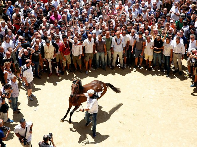 """The horse of the """"Lupa"""" (Wolf) parish is escorted by its groom and followed by supporters as they leave Del Campo square in Siena, Italy June 29, 2016. (Photo by Stefano Rellandini/Reuters)"""