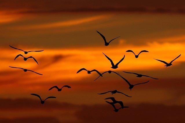 Birds fly while the sun sets Sunday, September 7, 2014, in Philadelphia. (Photo by Matt Slocum/AP Photo)