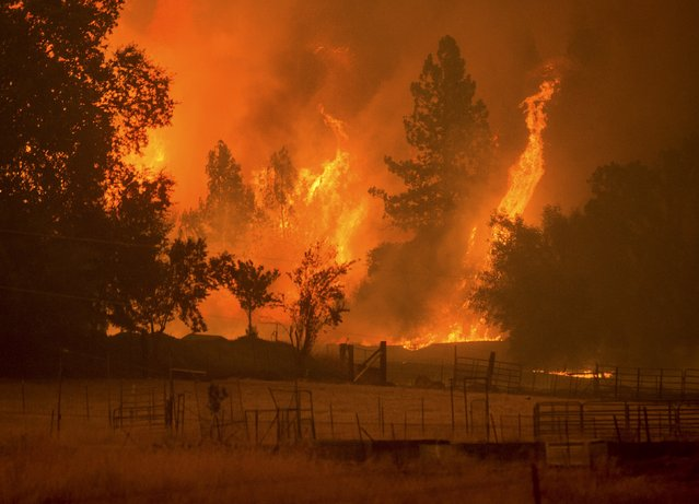 Flames from the Butte fire rise over a pasture in Mountain Ranch, California September 11, 2015. (Photo by Noah Berger/Reuters)