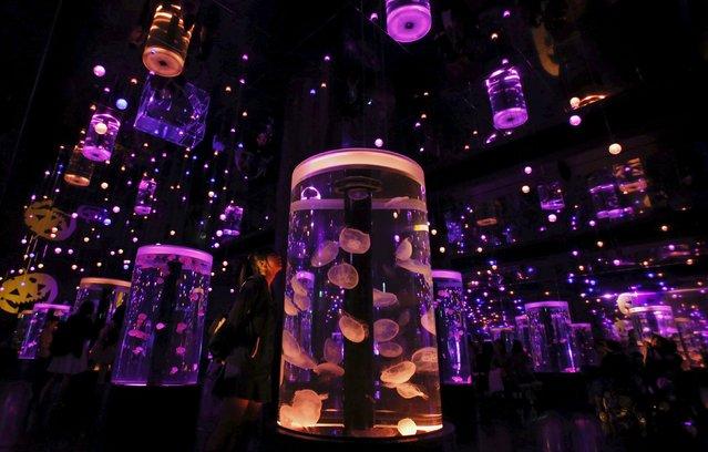 A visitor looks at jellyfish under special Halloween illumination during a seasonal event called Aqua Halloween at the Epson Aqua Park Shinagawa in Tokyo, Japan, October 10, 2015. (Photo by Yuya Shino/Reuters)