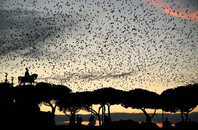 A murmuration of starlings flies over pine trees and the equestrian statue of King Vittorio Emanuele II on December 16, 2020 as the night falls over Piazza Venezia in central Rome. (Photo by Vincenzo Pinto/AFP Photo)