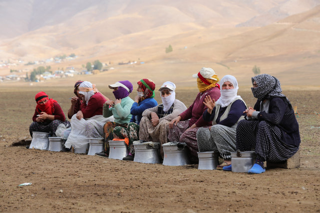 """Women arrive at the highlands to milk sheep after a long mule ride in Catak district of Turkey's eastern Van province on October 01, 2018. Women who milk animals are called """"Beriwans"""". Beriwans' journey to milk sheep begins with three hours ride on back of mules before reaching highlands where sheep are found. (Photo by Ali Ihsan Ozturk/Anadolu Agency/Getty Images)"""